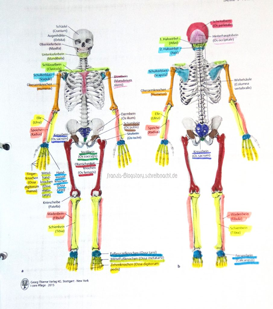 Dies ist ein Beispiel dafür wie ich beispielsweise die Anatomie in der Ausbildung gelernt habe. Ich lerne am besten anhand von jeder Menge bunter Zettel :P Quelle: Georg Thieme Verlag von 2015