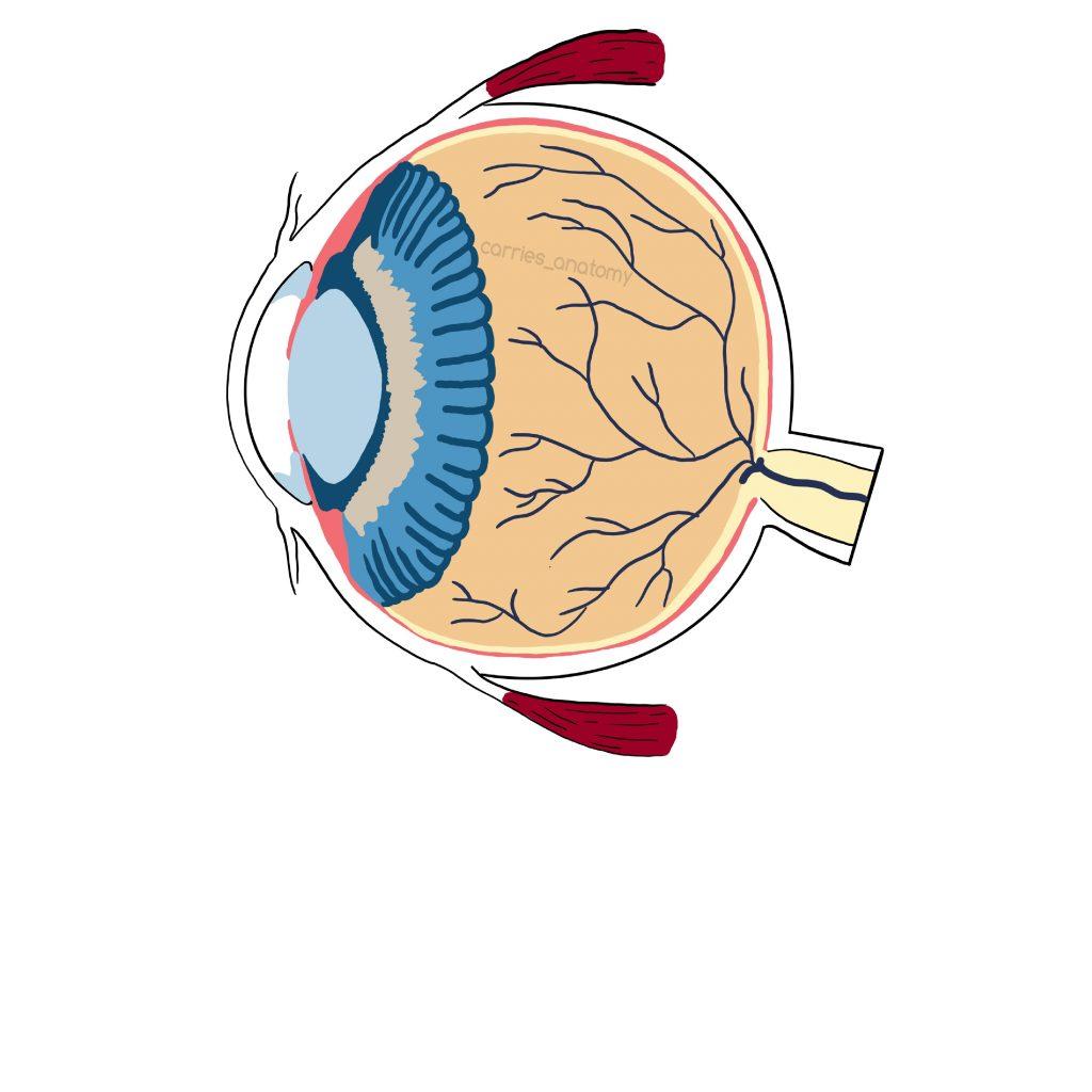 Das Auge, gemalt von der Lieben Carries_anatomy. franzis-Blogstory.schreibnacht.de